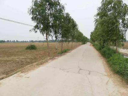 濮阳濮阳县1200亩水浇地出租