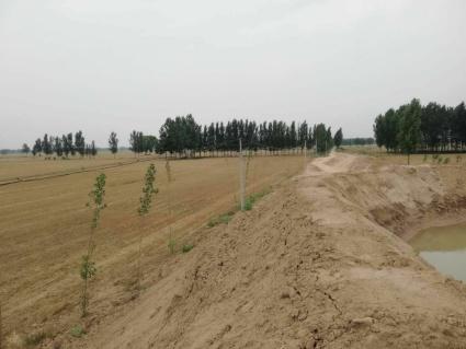 濮阳濮阳县1800亩水浇地出租