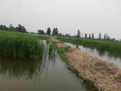 濮阳濮阳县150亩水产养殖用地出租
