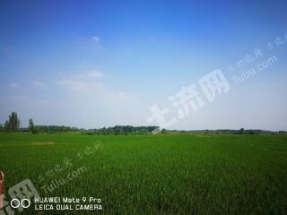滁州定遠縣1000畝水田出租 水電路三通 適合種植水稻小麥兩季和經濟作物
