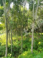 資陽雁江區103畝有林地轉讓