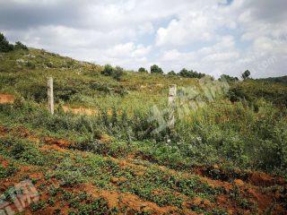 陆良县180亩水浇地出租