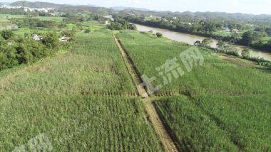 欽州  欽南區 300畝 水澆地 出租