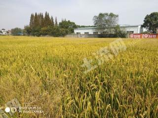 安慶懷寧縣200畝水田出租