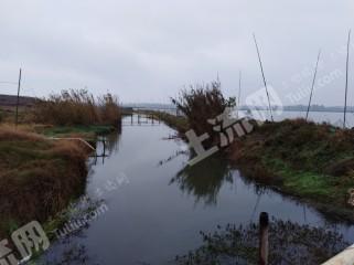 安庆宿松县4200亩能精养鱼的湖泊出租