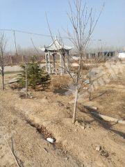 延津县新修107国道16亩大院出租或转让XX1130