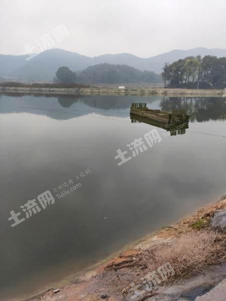 新余渝水區70畝坑塘出租