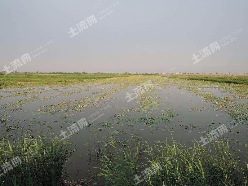 渭南大荔縣500畝魚塘轉讓
