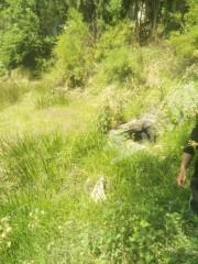 昆明市宜良县草甸镇68亩林地转让