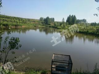 南陽臥龍區120畝綜合養殖用地魚塘加林地養鵝合作