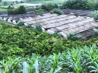 金堂竹篙附近 2000平米養殖場 出租