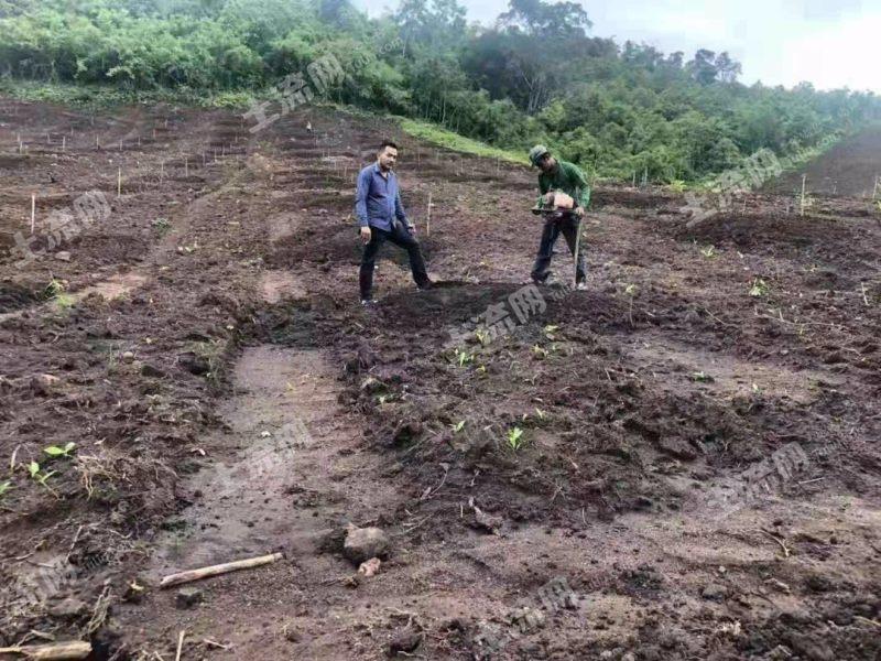 东南亚柬埔寨1500亩出售(4)