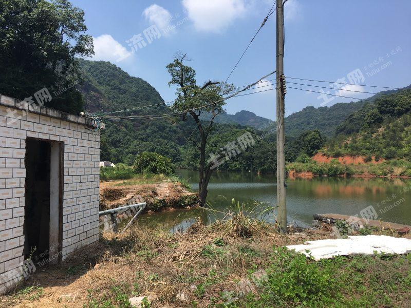 *韶關湞江區200畝魚塘出租