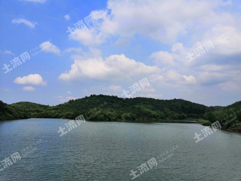 常德鼎城區  100畝水庫  可養雞養魚  垂釣 低價出租