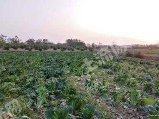 永州冷水灘區47畝旱地出租