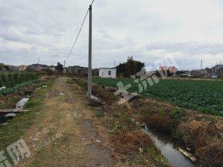 莆田秀嶼區100畝水田出租