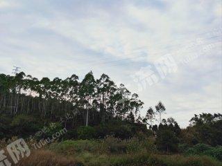 莆田仙游縣300畝有林地出租