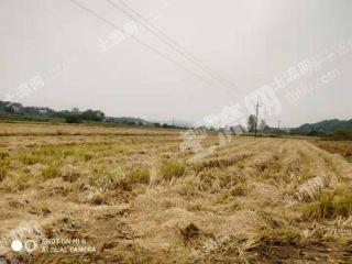 吉安市500畝旱地出租(XT24014)