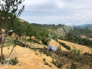 文山廣南縣南屏鎮800畝有林地轉讓或合作