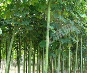 日照東港區5000平米農家庭院轉讓(65)