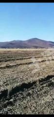 興安盟扎賚特旗5000畝有林地出租