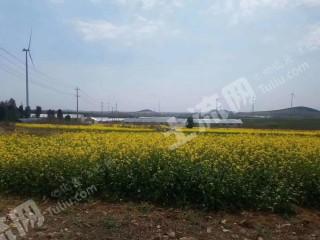 徐州邳州市200畝旱地出租 油菜花 大蒜 西瓜 蔬菜 草莓 紅薯小麥可以種植