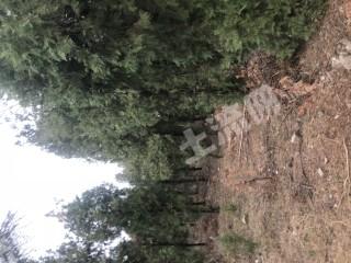 徐州邳州市800畝畜牧養殖用地出租 養豬 山羊,孔雀 雞鴨鵝等都可以
