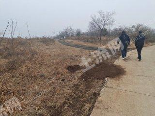 淮安盱眙縣800畝其它林地轉讓