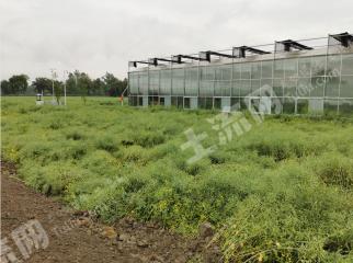 溫江萬春1200平米高標準恒溫玻璃大棚帶周邊耕地出租