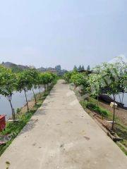 武漢東西湖區50畝農莊出租