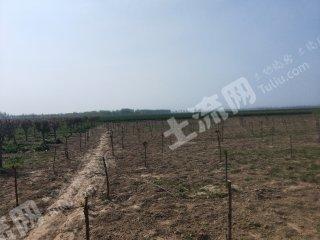 菏澤牡丹區45畝水澆地出租