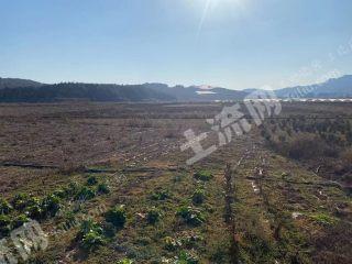 曲靖馬龍區150畝水澆地出租