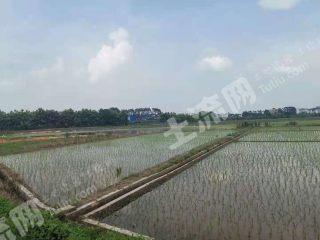 肇慶高要區135畝水田出租