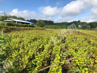 簡陽賈家鎮附近 56畝葡萄園 轉讓