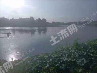 重慶145畝魚塘出租