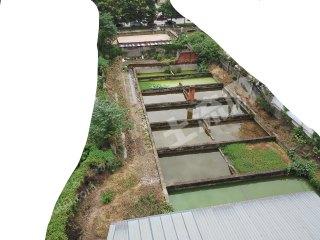 崇州格子水塘出租(密度養殖)