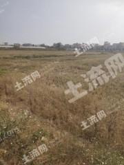 广州白云区60亩水浇地出租