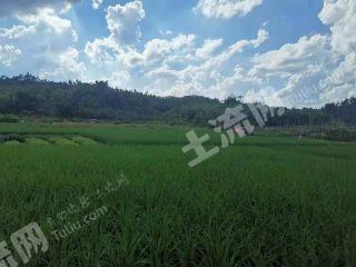 肇庆高要区190亩外滩草皮养殖用地出租