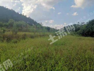 肇庆高要区270亩草皮地块出租